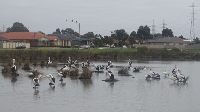 BirdsPlantingWetlands10
